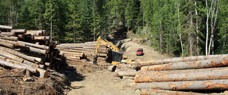 Forest Planning and Development near Begbie Falls