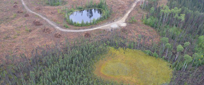 Wetland Leave Zone