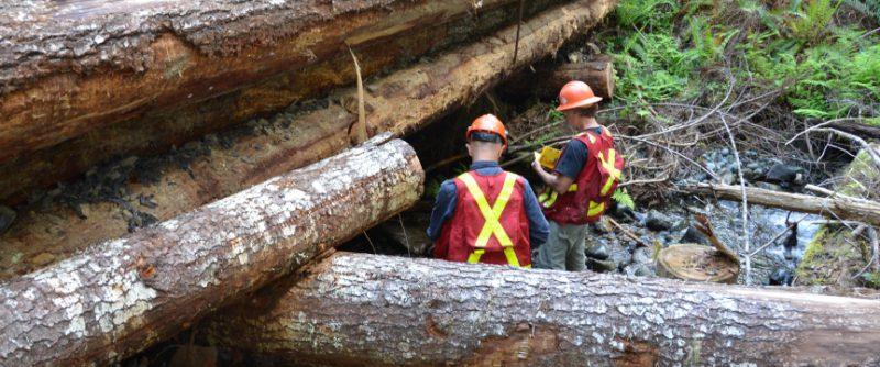 F0013_auditors examining log bridge