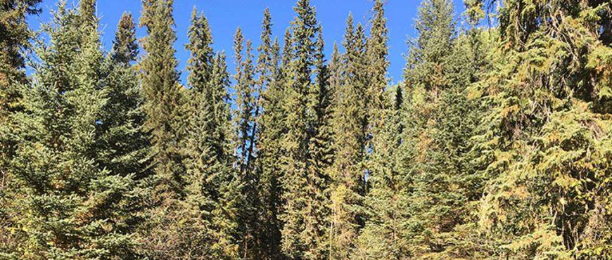 bc-forests-19