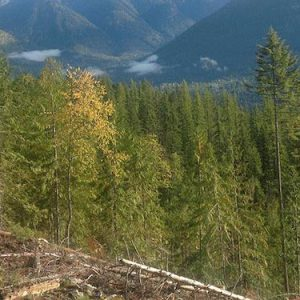SIR49-Woodlot-Kootenay-Lake-TSA